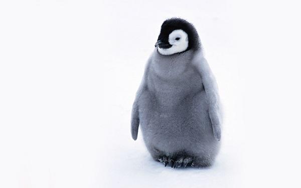 Новый бэкдор для Linux обладает широким функционалом