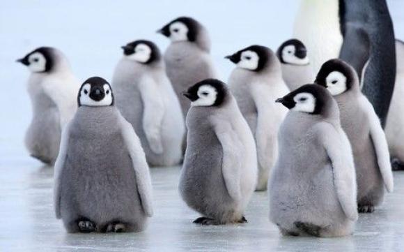 Обнаружено новое семейство троянцев для Linux